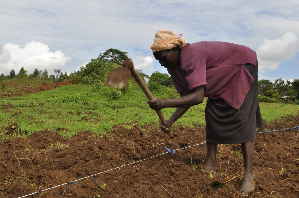 A coffee farmer cultivates her piece of land