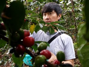 Mr. Chris- Connect Coffee Director, involved in the harvesting of coffee.