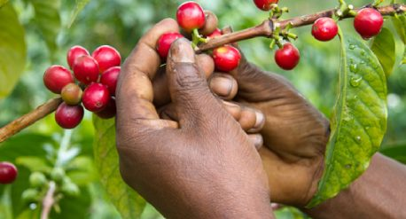 IMPROVING COFFEE PRODUCTION QUALITY, CONNECT COFFEE, COFFEE CONSUMPTION, Purpose beyond profit
