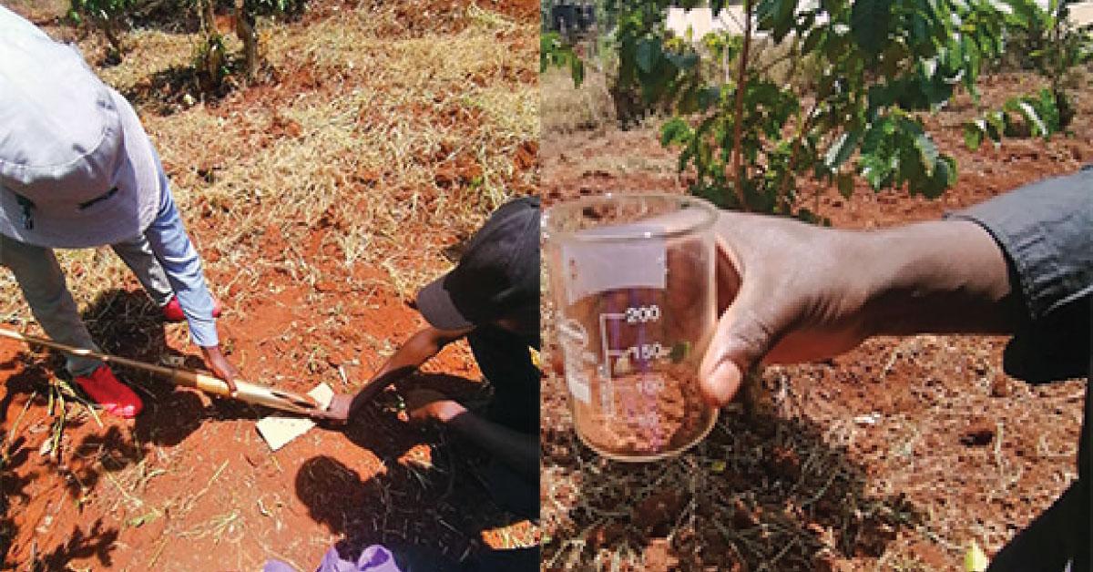 Soil testing , soil sampling,soil ph