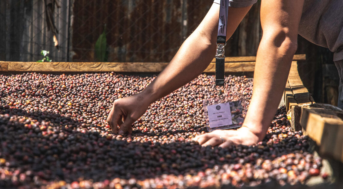 Kenya, Natural coffee, limited edition